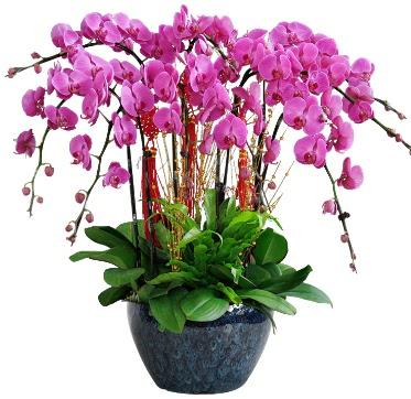 9 dallı mor orkide  Uşak 14 şubat sevgililer günü çiçek