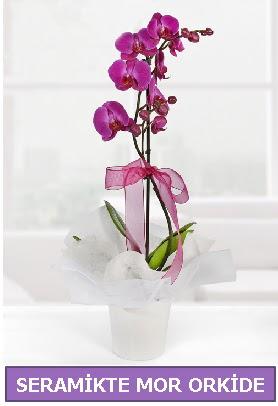 Seramik içerisinde birinci kalite tek dallı mor orkide  Uşak İnternetten çiçek siparişi
