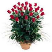 Uşak uluslararası çiçek gönderme  10 adet kirmizi gül cam yada mika vazo