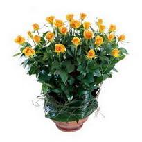 Uşak cicekciler , cicek siparisi  10 adet sari gül tanzim cam yada mika vazoda çiçek