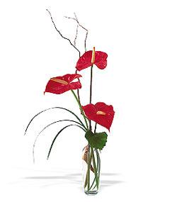 Uşak çiçek siparişi sitesi  cam yada mika Vazoda 3 adet  antoryum