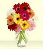 Uşak çiçek yolla , çiçek gönder , çiçekçi   cam yada mika vazoda 15 özel gerbera