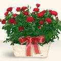 Uşak İnternetten çiçek siparişi  11 adet kirmizi gül sepette