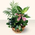 Uşak çiçek satışı  5 adet canli çiçek sepette