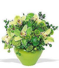 cam yada mika vazoda 5 adet orkide   Uşak online çiçekçi , çiçek siparişi