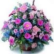 karisik mevsim kir çiçekleri  Uşak çiçek gönderme sitemiz güvenlidir