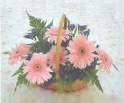 gerbera çiçeklerinde sepet   Uşak çiçek yolla
