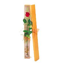 ince  kutuda  1  gül   Uşak çiçek yolla