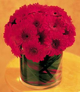 Uşak ucuz çiçek gönder  23 adet gerbera çiçegi sade ve sik cam içerisinde