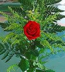 1 adet kirmizi gül buketi   Uşak çiçek siparişi vermek