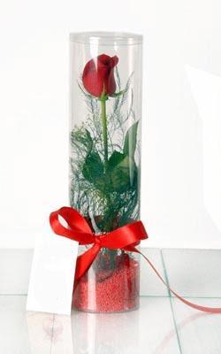 Uşak çiçek yolla  Silindir vazoda tek kirmizi gül