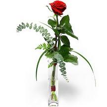 Uşak 14 şubat sevgililer günü çiçek  Sana deger veriyorum bir adet gül cam yada mika vazoda