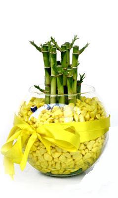 cam fanus içerisinde bambo  Uşak internetten çiçek satışı