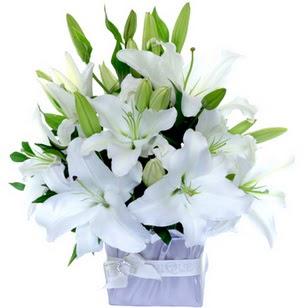 Uşak çiçek yolla  2 dal cazablanca vazo çiçeği