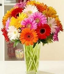 Uşak çiçek servisi , çiçekçi adresleri  15 adet gerbera çiçek vazosu