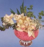 Uşak çiçek mağazası , çiçekçi adresleri  Dal orkide kalite bir hediye