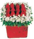 Uşak çiçek gönderme  Kare cam yada mika içinde kirmizi güller - anneler günü seçimi özel çiçek
