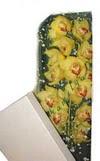 Uşak çiçek gönderme  Kutu içerisine dal cymbidium orkide
