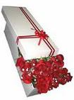 Uşak çiçekçi telefonları  11 adet 1.kalite magnum güller
