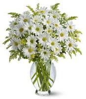 Vazo içerisinde beyaz krizantem çiçekleri  Uşak çiçekçi mağazası