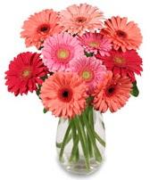 vazo içerisinde 13 adet gerbera çiçeği  Uşak çiçek siparişi sitesi