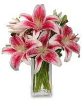 Vazo içerisinde 5 dal kazablanka çiçeği  Uşak cicekciler , cicek siparisi