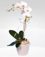 1 dallı orkide saksı çiçeği  Uşak online çiçekçi , çiçek siparişi