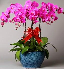 7 dallı mor orkide  Uşak çiçek online çiçek siparişi
