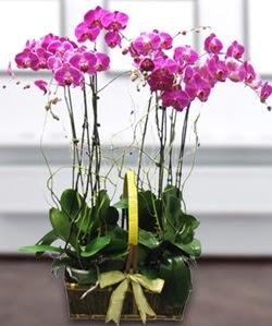 4 dallı mor orkide  Uşak güvenli kaliteli hızlı çiçek