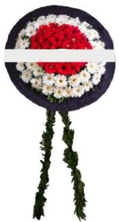mozele çiçeği  Uşak hediye sevgilime hediye çiçek
