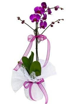 Tek dallı mor orkide  Uşak çiçekçi telefonları