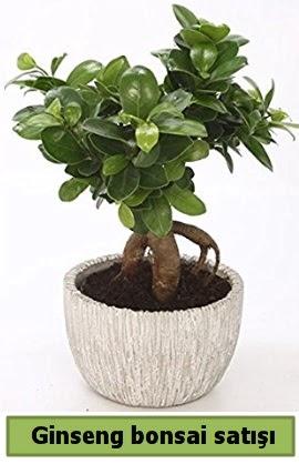 Ginseng bonsai japon ağacı satışı  Uşak çiçekçi telefonları