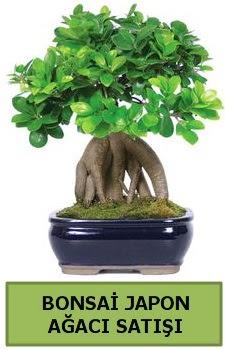 Bonsai japon ağacı satışı  Uşak çiçek satışı