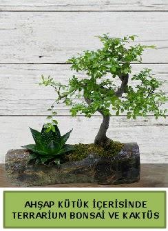 Ahşap kütük bonsai kaktüs teraryum  Uşak internetten çiçek siparişi