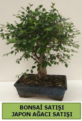 Minyatür bonsai japon ağacı satışı  Uşak çiçek gönderme sitemiz güvenlidir