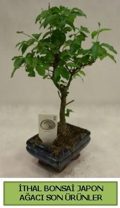 İthal bonsai japon ağacı bitkisi  Uşak hediye sevgilime hediye çiçek