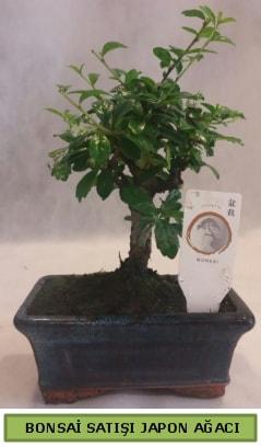 Minyatür bonsai ağacı satışı  Uşak çiçek gönderme