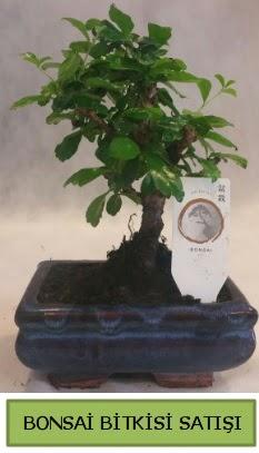 Bonsai ithal görsel minyatür japon ağacı  Uşak ucuz çiçek gönder