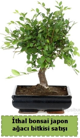 İthal bonsai saksı çiçeği Japon ağacı satışı  Uşak İnternetten çiçek siparişi