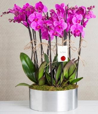 11 dallı mor orkide metal vazoda  Uşak çiçek gönderme sitemiz güvenlidir