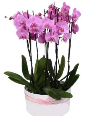 Beyaz seramik içerisinde 7 dallı mor orkide  Uşak çiçekçi telefonları