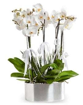 Beş dallı metal saksıda beyaz orkide  Uşak çiçek yolla