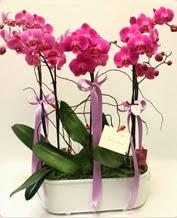 Beyaz seramik içerisinde 4 dallı orkide  Uşak ucuz çiçek gönder
