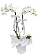 2 dallı beyaz orkide  Uşak güvenli kaliteli hızlı çiçek
