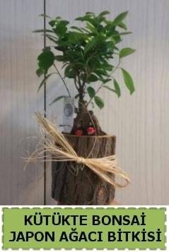 Kütük içerisinde doğal bonsai ağacı  Uşak çiçekçi telefonları