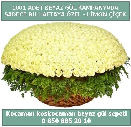 1001 adet beyaz gül sepeti özel kampanyada  Uşak çiçek gönderme sitemiz güvenlidir