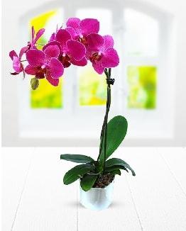 Tek dallı mor orkide  Uşak çiçek satışı