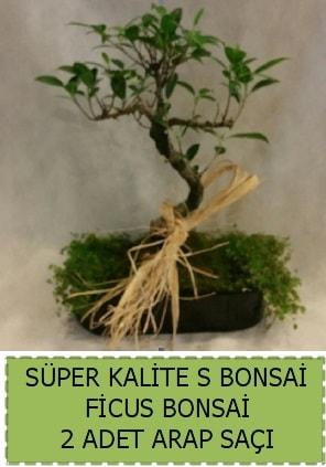 Ficus S Bonsai ve arap saçı  Uşak çiçekçi telefonları