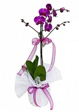 Tekli Mor Orkide  Uşak çiçek yolla