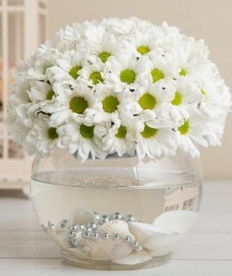 Fanusta beyaz Papatya  Uşak çiçek satışı
